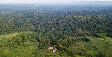 Privéreis Oeganda& Kenia gorilla safari - 14 dagen | Matoke Tours