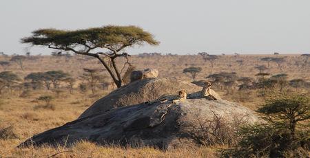 Uw Kenia reis op maat | Matoke Tours Kenia specialisten