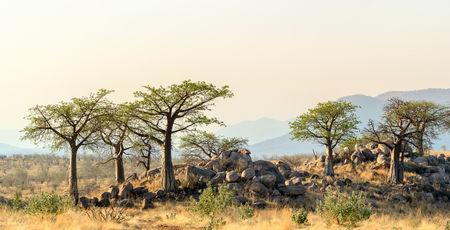 Individuele & prive reizen Tanzania & Zanzibar | Matoke Tours