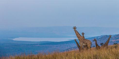 Luxe rondreis Rwanda - Exclusief Rwanda ontdekken met Matoke Tours