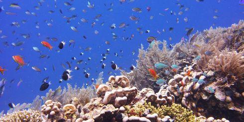 Vakantie Comoren - Reizen naar Comoren | Indische Oceaan | Matoke Tours