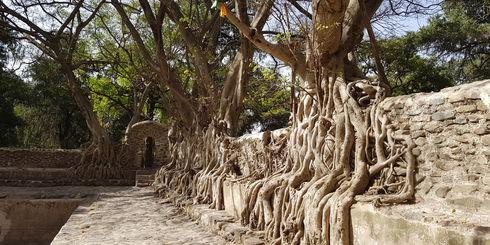Privéreis Ethiopie cultuur relegie historie - 11 dagen|Matoke Tours