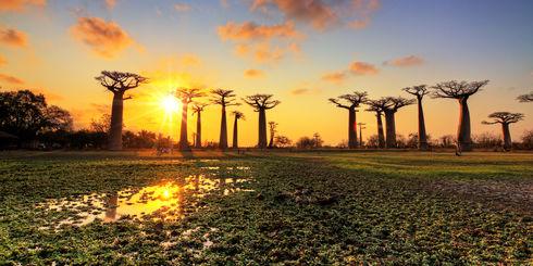 Safari & vakantie Afrika - Oeganda, Tanzania, Zanzibar, Madagascar reizen
