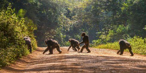 Wat mag je niet missen in Rwanda? » Matoke