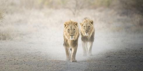 Rondreis Namibië – Reizen naar Namibië | Matoke Tours