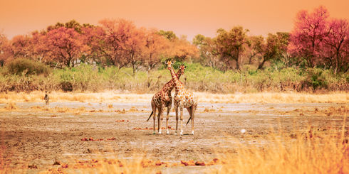 Vakantie Zambia - Safari Zambia reizen   Matoke Tours