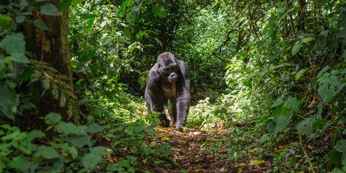 Combinatiereizen Afrika – Bestemmingen in Afrika combineren| Matoke Tours