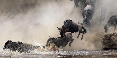 Safari Tanzania - Vakantie of rondreis in Tanzania | Matoke Tours