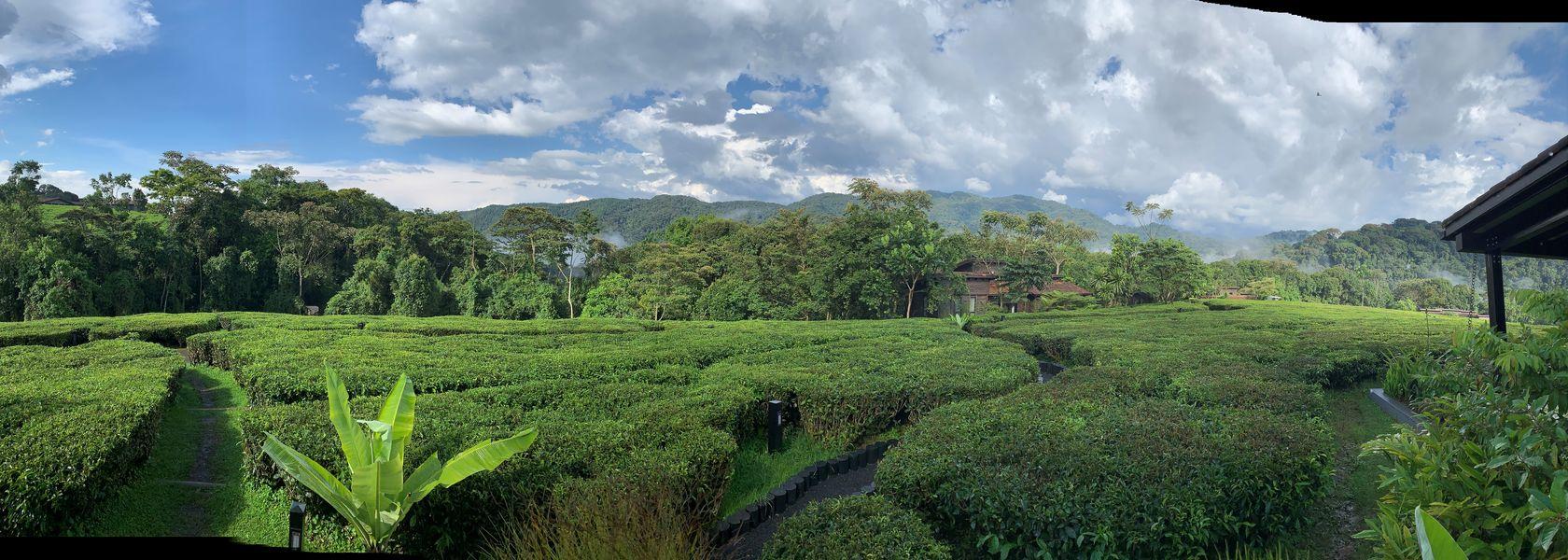 Rwanda reizen - Rwanda rondreis - vakantie reis Rwanda