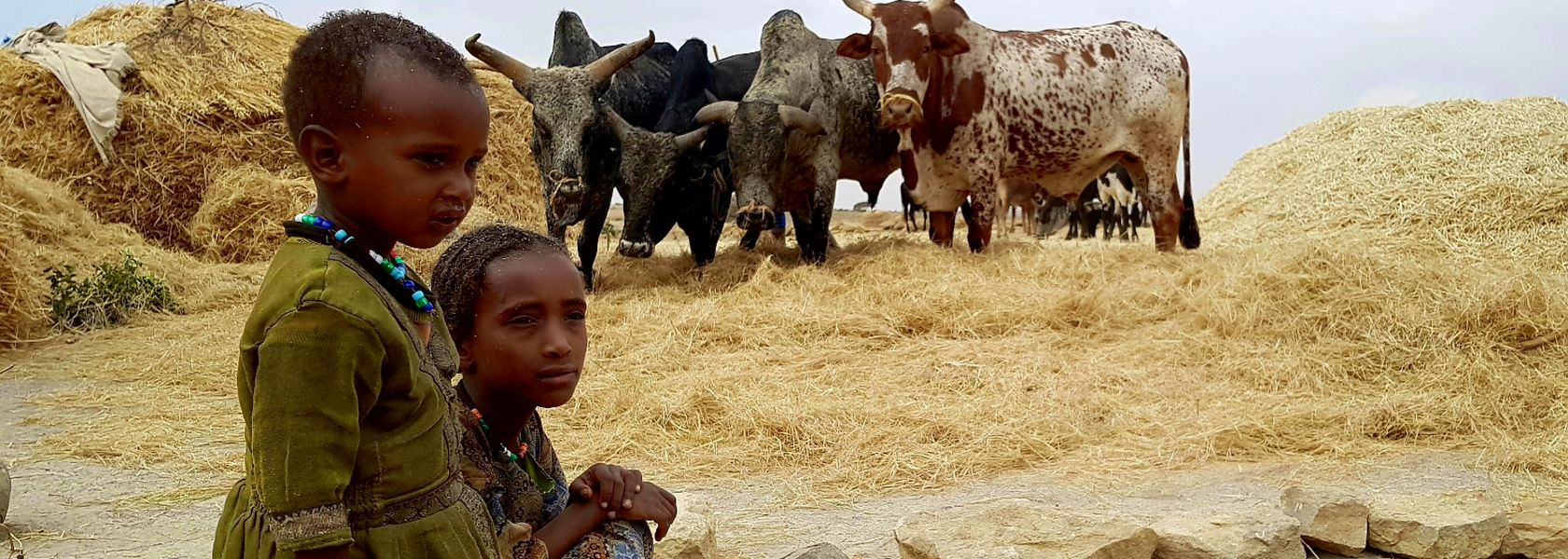 Harar Ethiopië | Matoke Tours