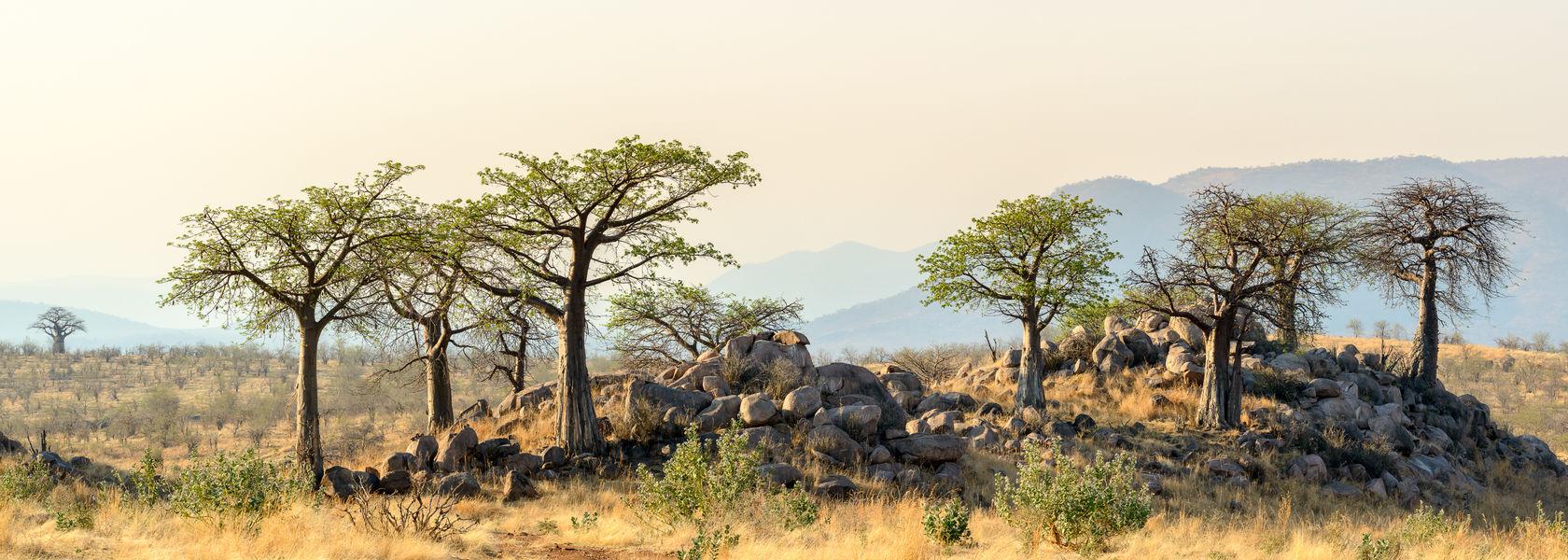 Zuid Tanzania safari met Comoren - Matoke Tours
