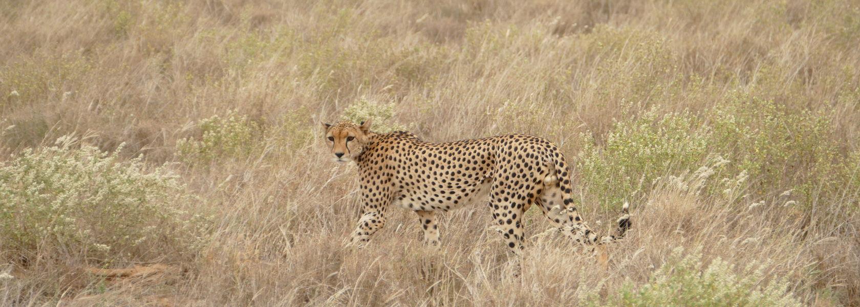 Kenia reisinformatie | Matoke Tours