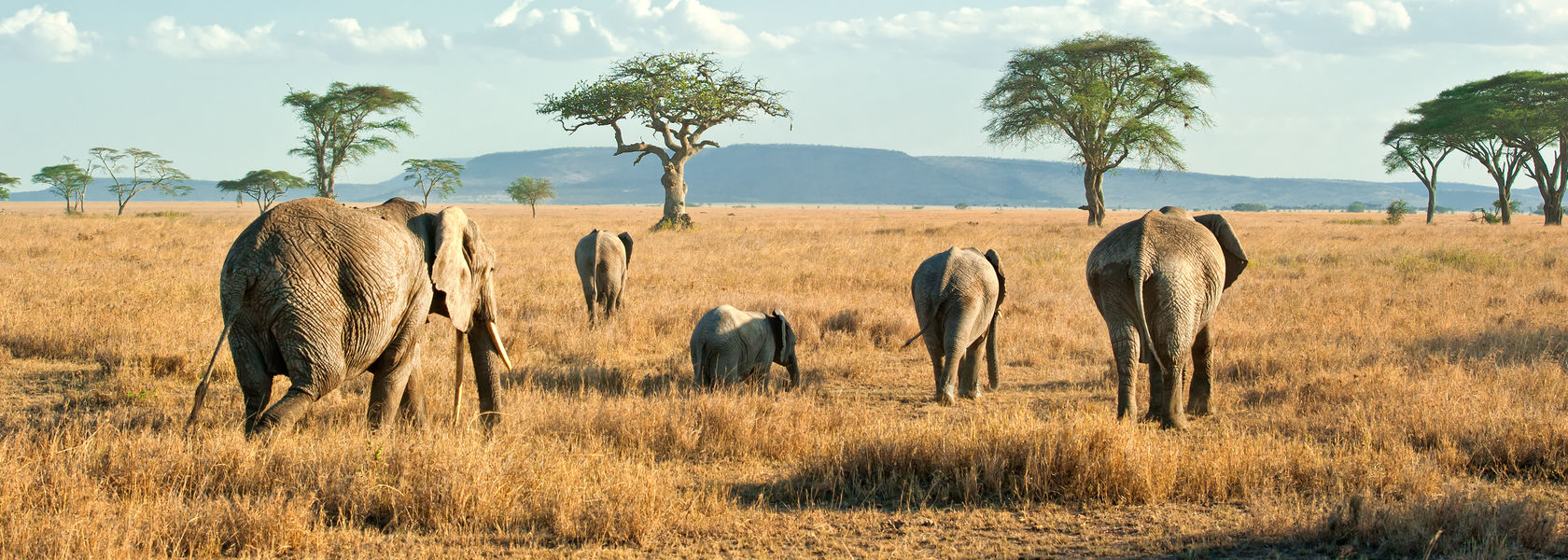 Serengeti Safari - Bezoek Serengeti National Park | Matoke Tours