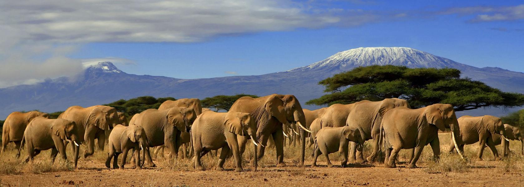 Rondreis Tanzania – Uit liefde voor Tanzania | Matoke Tours