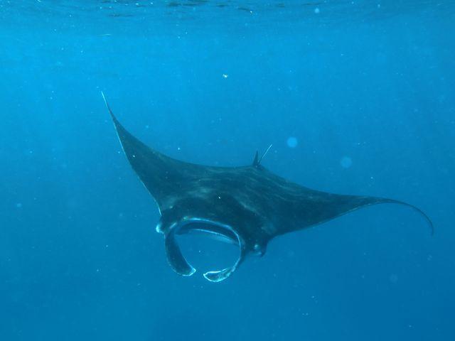 Bezienswaardigheden Comoren - bultrugwalvissen, walvishaaien, snorkelen, duiken