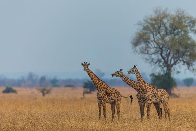 Bezienswaardigheden Zambia - Highlights & Hoogtepunten | Matoke Tours