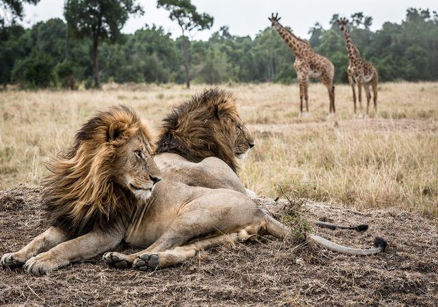 Last minute Kenia | Matoke Tours | Uit liefde voor Afrika