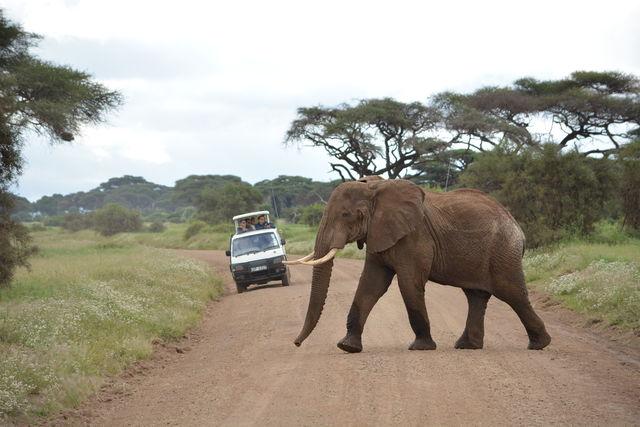 Op zoek naar de Kilimanjaro! » Matoke