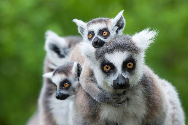 Projecten Madagascar » Matoke