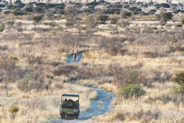 Kalahari woestijn in Botswana - Centraal Kalahari Game Reservaat - Matoke Tours