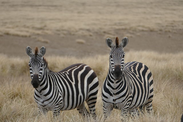 BLOG: wandelen door Tanzania - cultuur reis Ngorongoro Tanzania