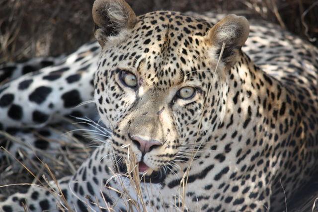 Big 5 - Alles over de grote vijf dieren van Afrika | Matoke Tours