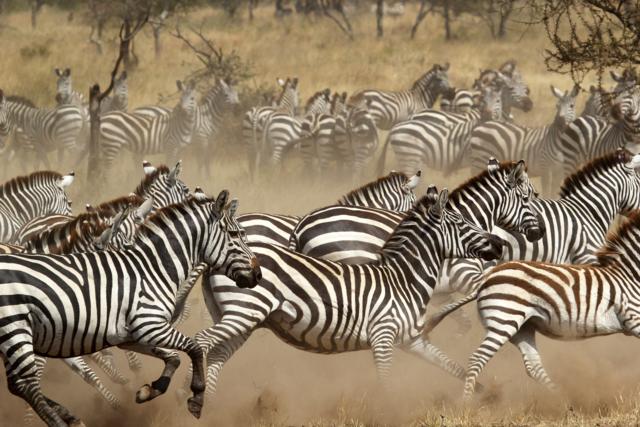 Rondreis Kenia Tanzania – Combinatie reizen | Matoke Tours