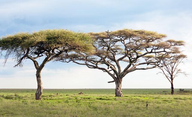 Reis- en videoverslag: op safari in tanzania tijdens Corona | Matoke Tours
