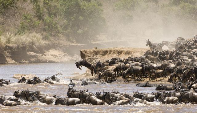 Beste reistijd voor safari in Afrika | Matoke Tours