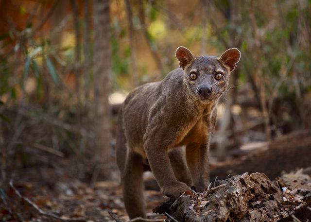 Madagascar reis - Kirindy Forest Reserve
