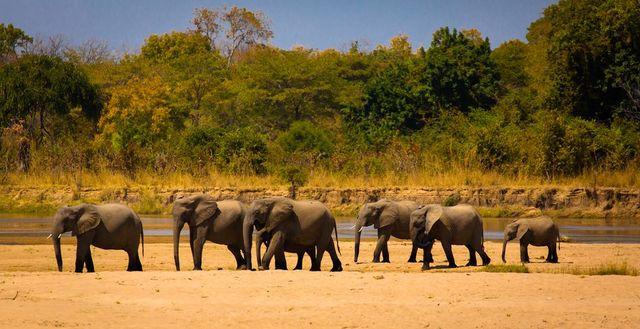 Privéreis Zambia exclusieve safarireis - 16 dagen Matoke Tours