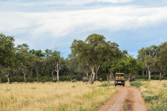 South Luangwa - Hoogtepunten - Zambia