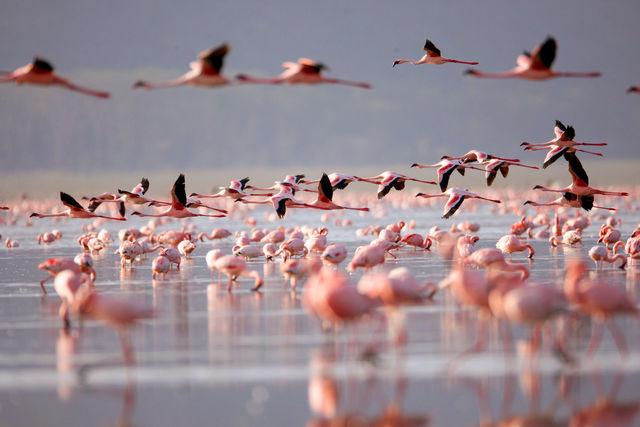 Lake Naivasha & Hell's Gate National Park | Matoke Tours