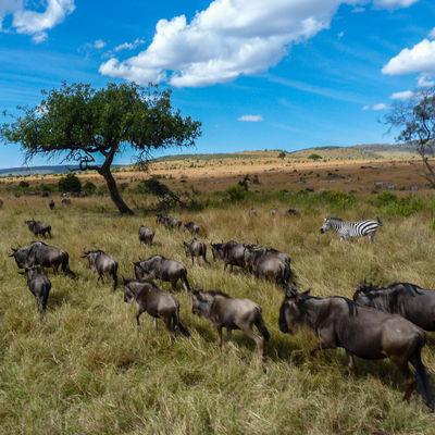 Safari Rondreis door Tanzania met 4 nationale parken en Zanzibar
