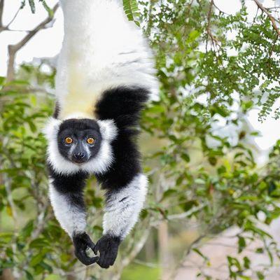 Groepsreis Madagascar & Mauritius - Rondreis