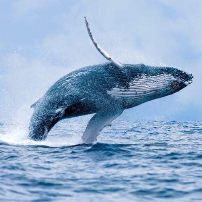 walvis reis Madagascar - rondreis Madagaskar - walvis migratie reizen
