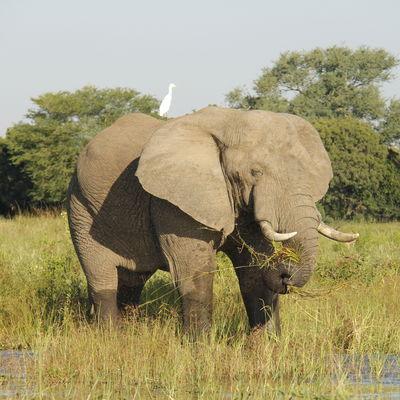 Privéreis Zambia Malawi avontuurlijk - 20 dagen|Matoke Tours