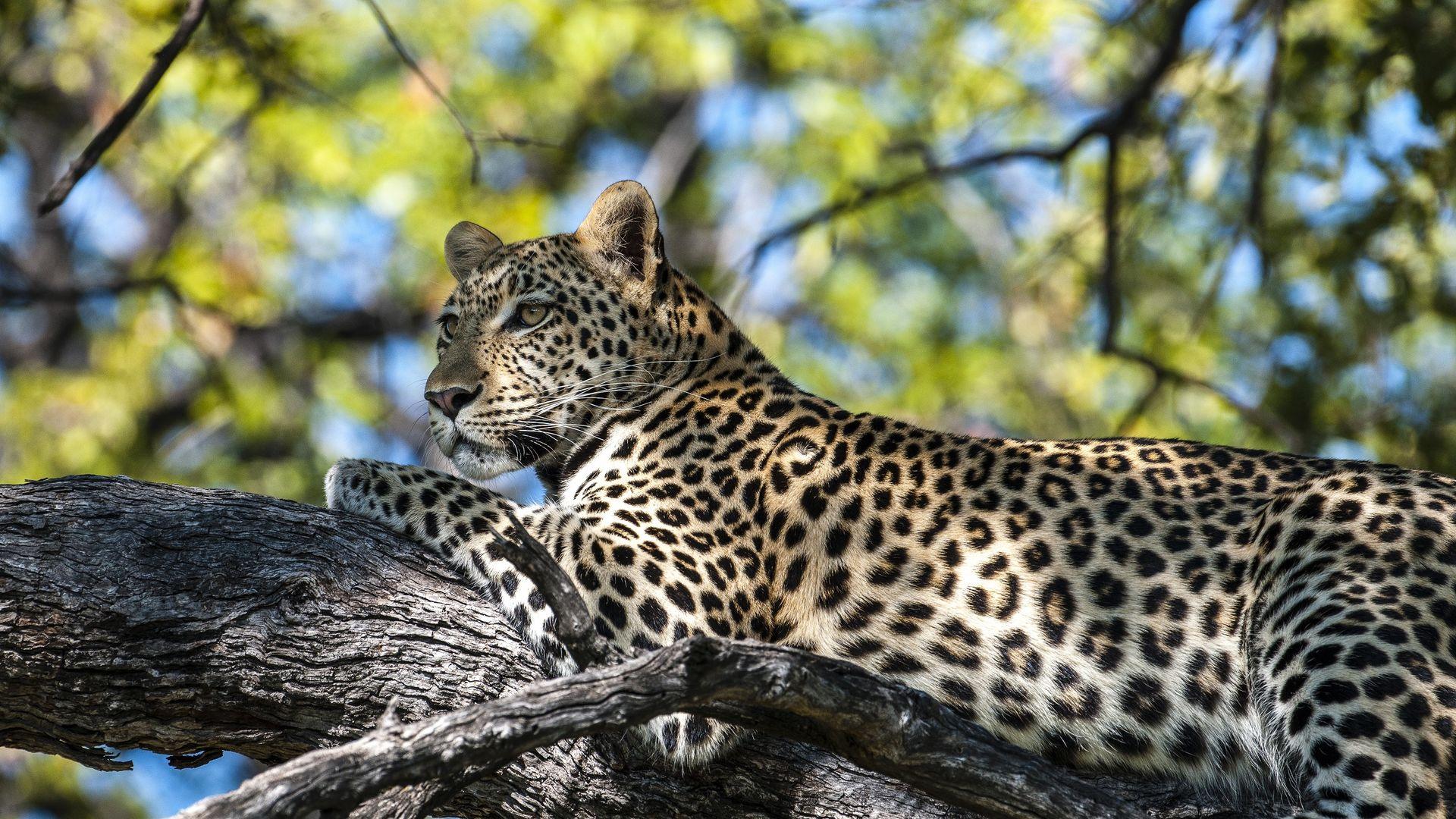 Zambia Botswana - Safari rondreis met Matoke Tours