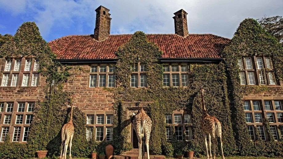 Giraffe Manor » Matoke
