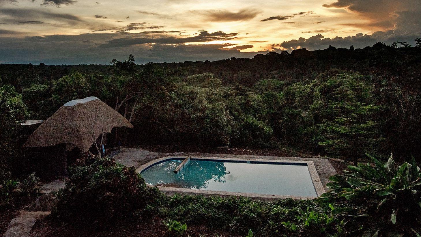 Turaco Treetops » Matoke