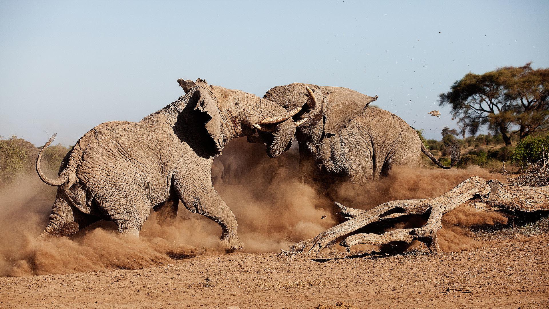 Privéreis Kenia hoogtepunten safari - 10 dagen | Matoke Tours
