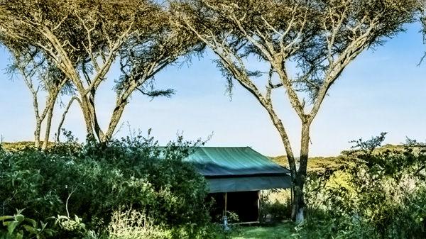 Angata Ngorongoro Camp » Matoke