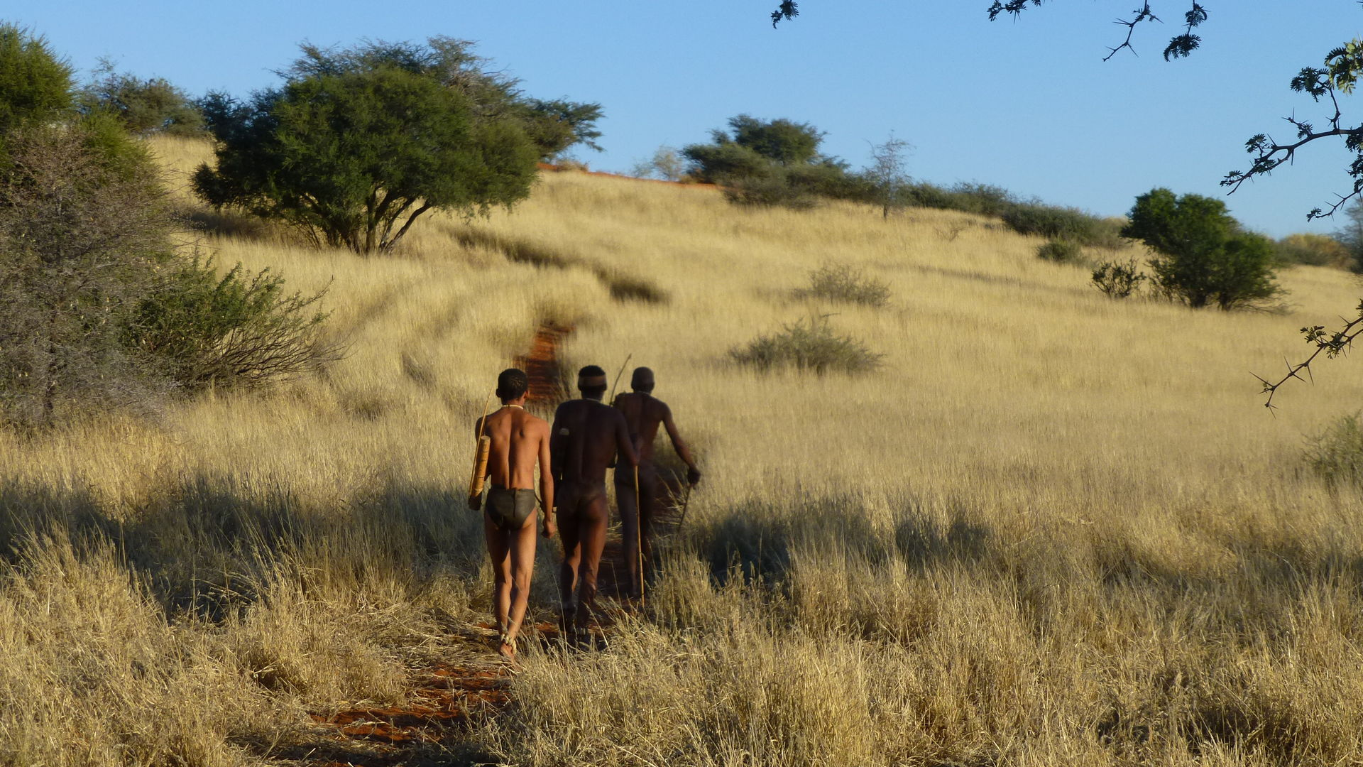 De Kalahari woestijn in Namibie - Kalahari desert - Matoke Tours