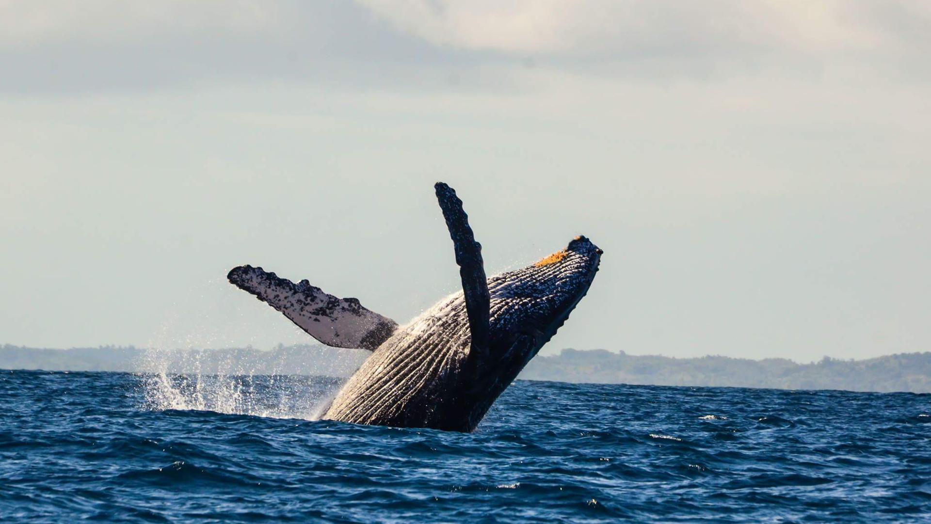 Saint Marie walvissen spotten Madagaskar