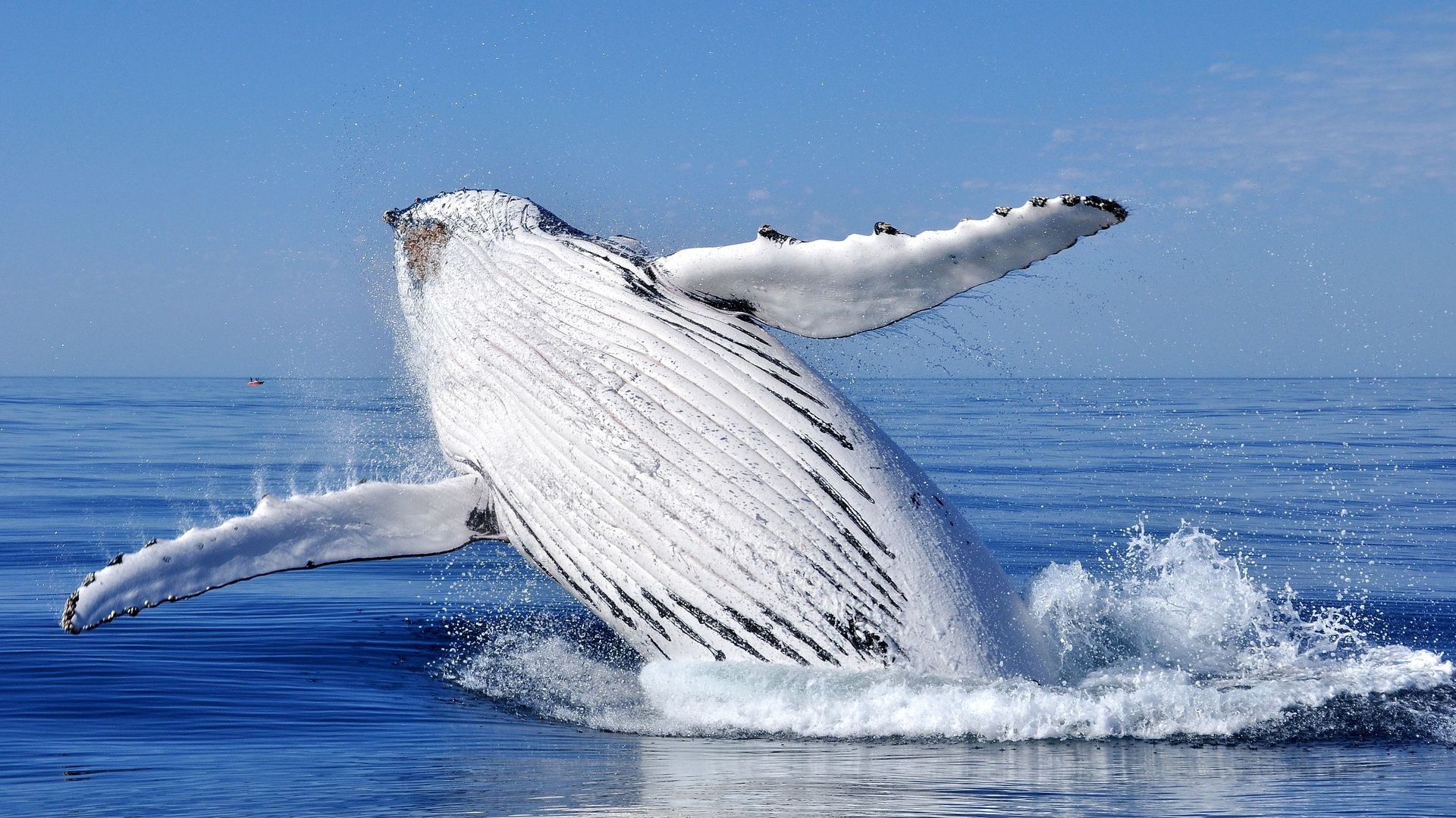 Privéreis Madagascar familie walvissen - 15 dagen|Matoke Tours