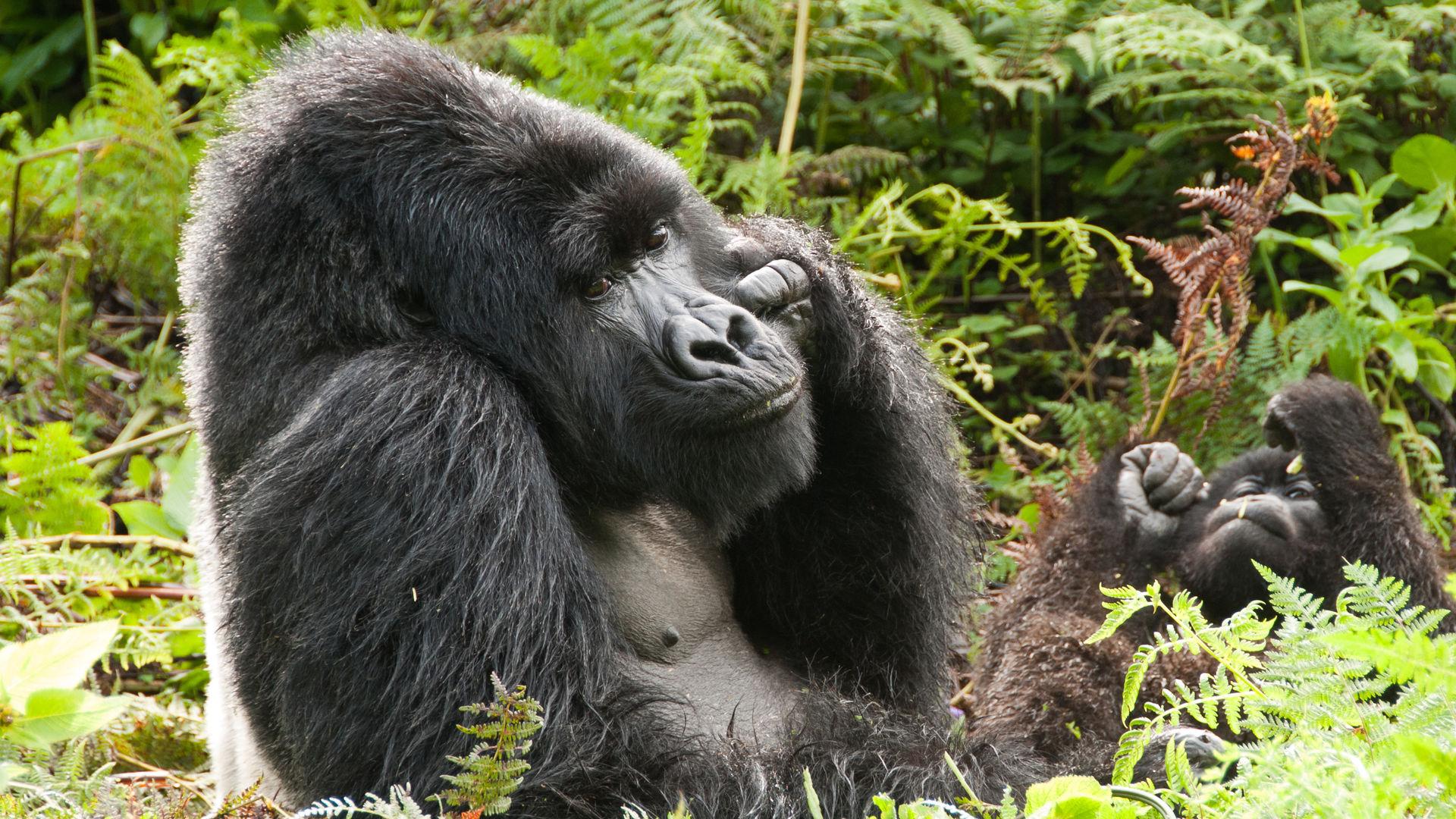 korte safari Oeganda – individuele prive reis – 1 week Uganda
