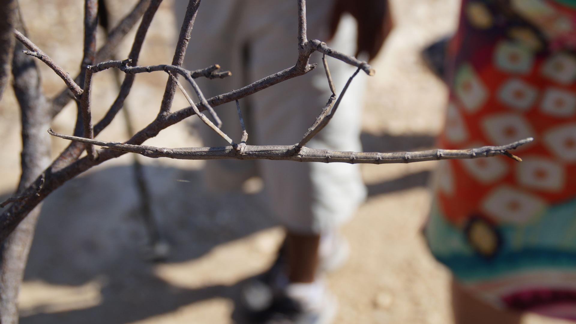 Een bezoek aan het Colorado van Madagascar, Isalo National Park