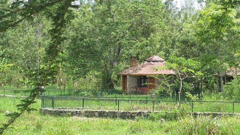 Kiboko Lodge » Matoke