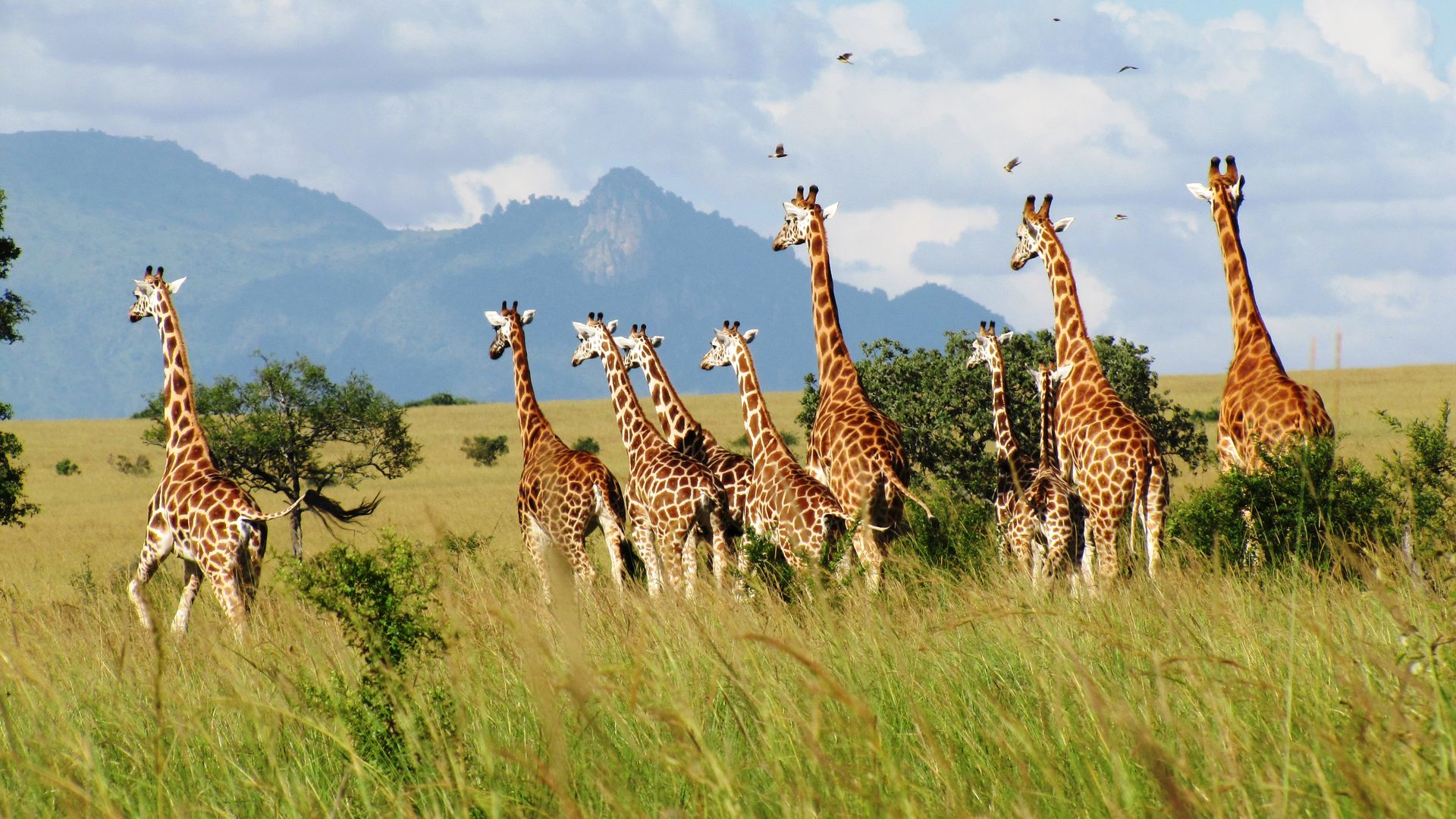 Uganda safaris in Kidepo Valley – Matoke Tours