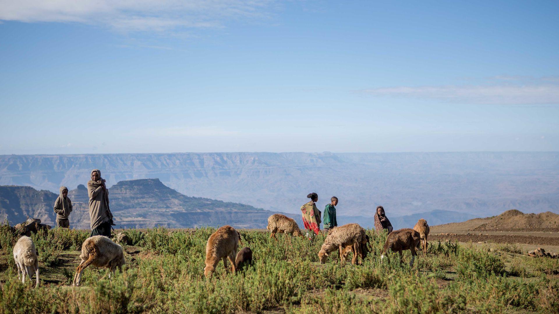 Beste reistijd Ethiopië - Weer & klimaat informatie | Matoke Tours